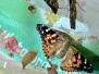 Year 4 Butterflies